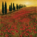 Poppies by Steve Thoms Fine Art Print