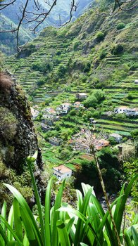 The terraces of Madeira – a typical scene on this painting holiday in Madeira